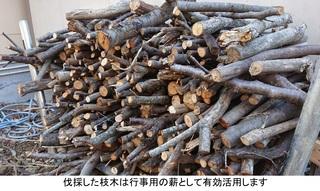 伐採された枝