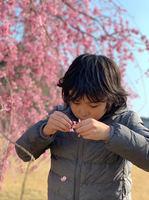 桜(彪).jpg